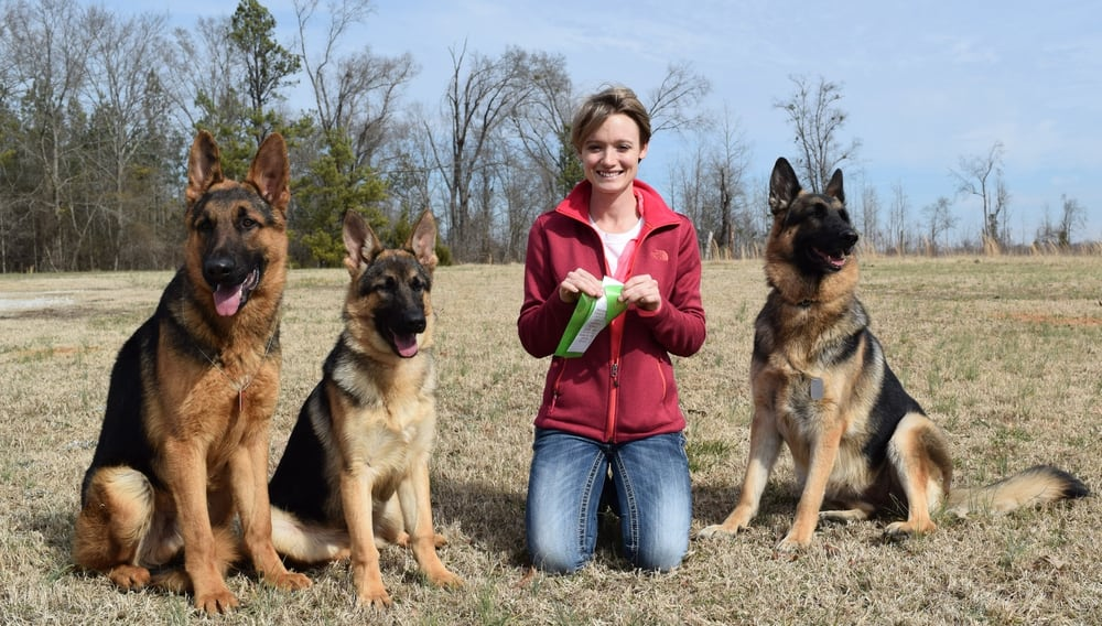 Appleridge German Shepherds: 5225 W Ellis Rd, Griffin, GA