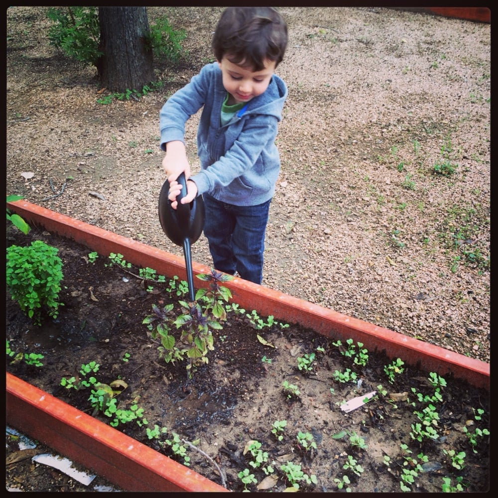 Gardening At The Mana Academy. Watering The Sprouts And