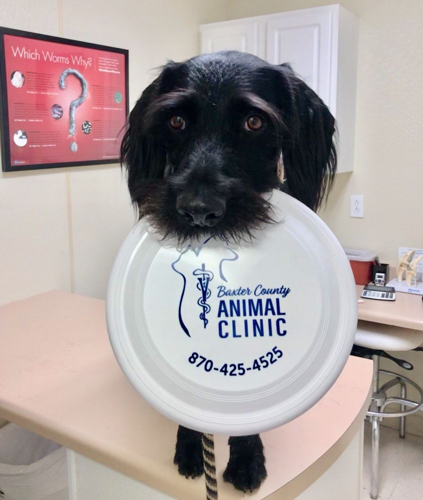 Baxter County Animal Clinic: 200 Bomber Blvd, Mountain Home, AR