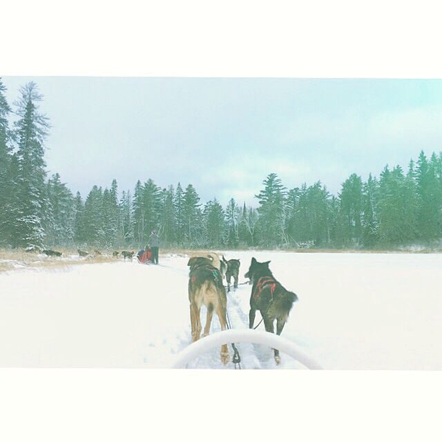 White Wilderness  Sled Dog Adventures: Ely, MN