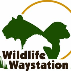 Wildlife waystation 16 photos 17 reviews community for 12651 little tujunga canyon lake view terrace ca 91342