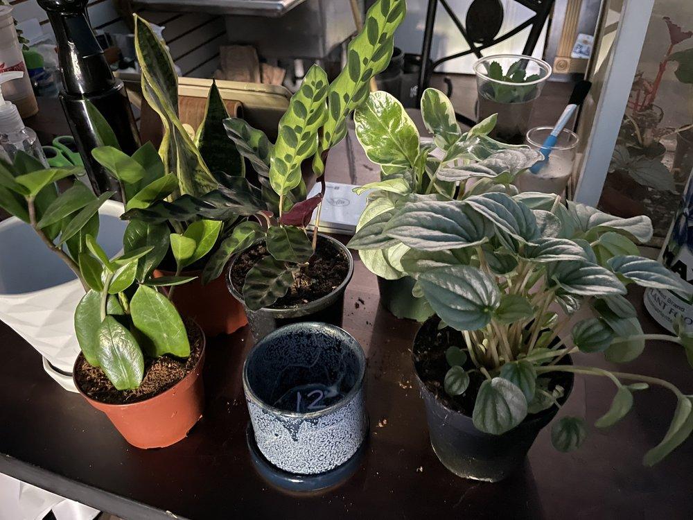 Photo of Plantlush: San Jose, CA