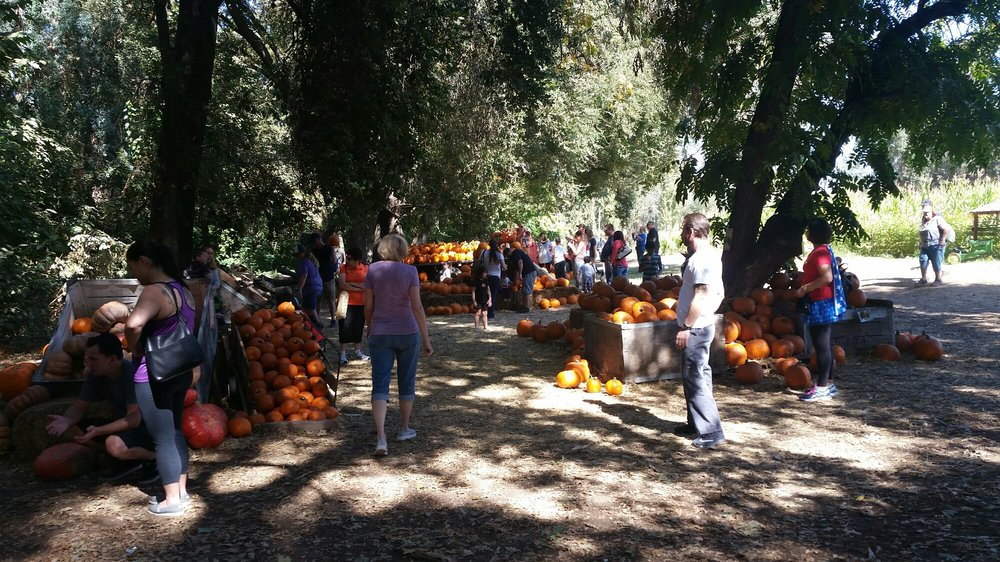 Hillcrest Christmas Tree & Pumpkin Farm