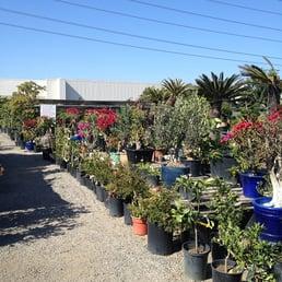 Emily Garden Nursery Thenurseries