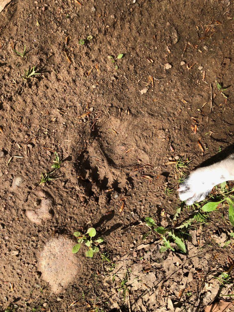 Bear Paw Outdoor Adventure Resort: N3494 Hwy 55, White Lake, WI