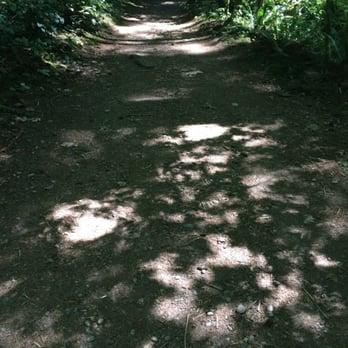 Evergreen admissions essay