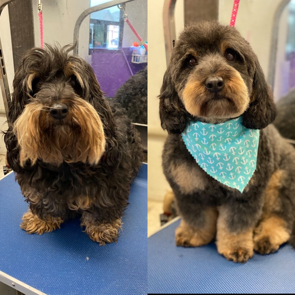 Elite Paws Mobile Grooming Salon: 123 Mobile Groomer, Woodway, TX