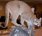 Wildlife Sports & Educational Museum: 3747 State Hwy 30, Amsterdam, NY