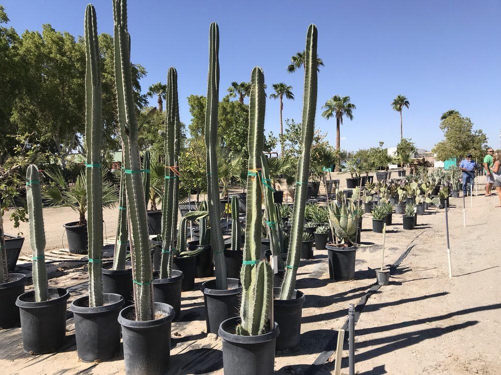 Yuma Nursery Supply 15 Photos Nurseries Gardening 4405 S Avenue A Az Phone Number Yelp