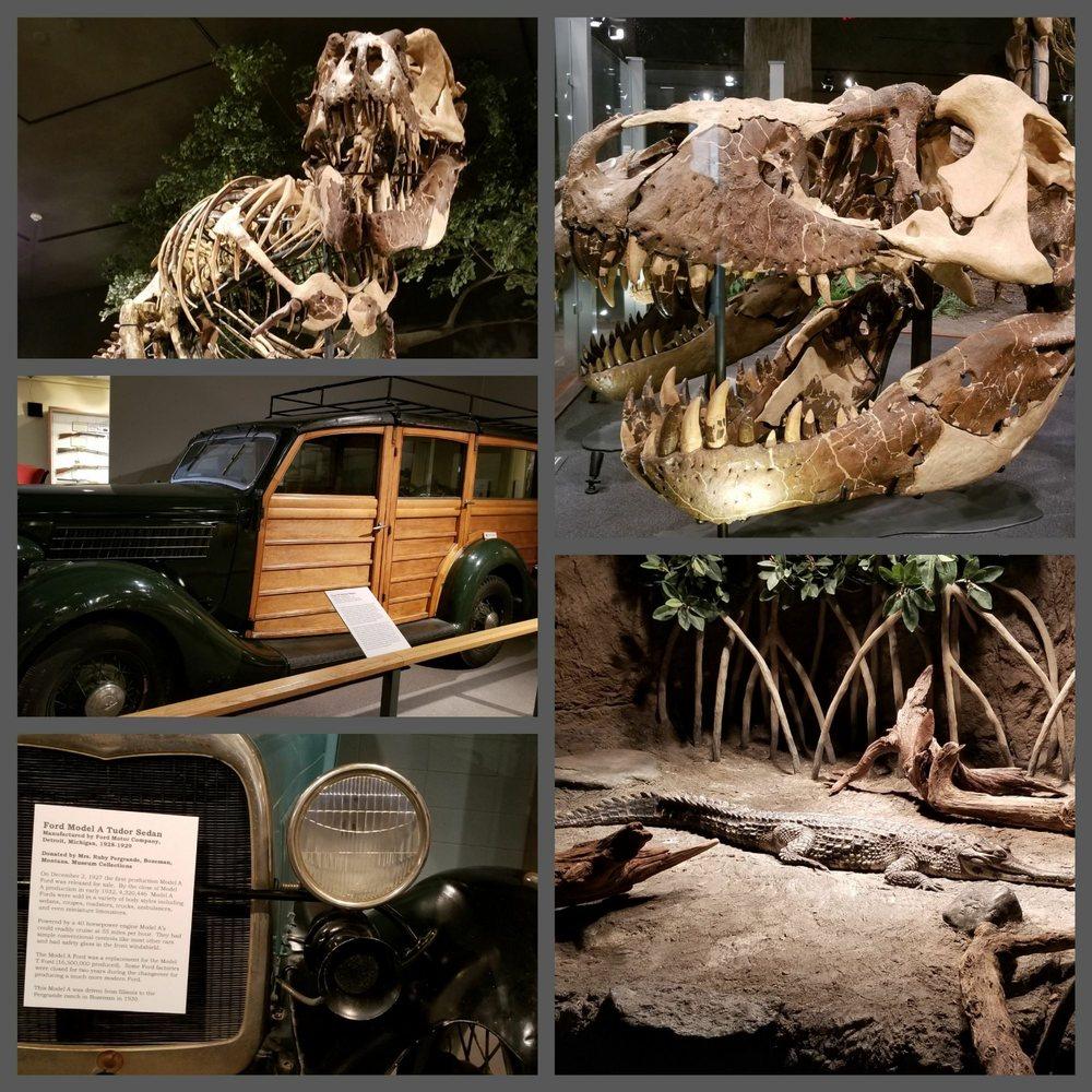 Museum of the Rockies: 600 W Kagy Blvd, Bozeman, MT