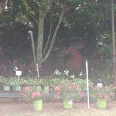 Photo Of Pell S Citrus Nursery Os Fl United States