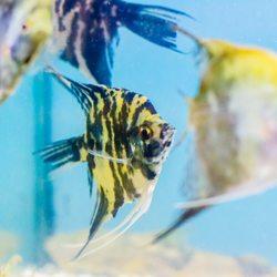 48bc9014 Beltway Aquarium - 39 Photos & 14 Reviews - Aquariums - 3306 Crain ...