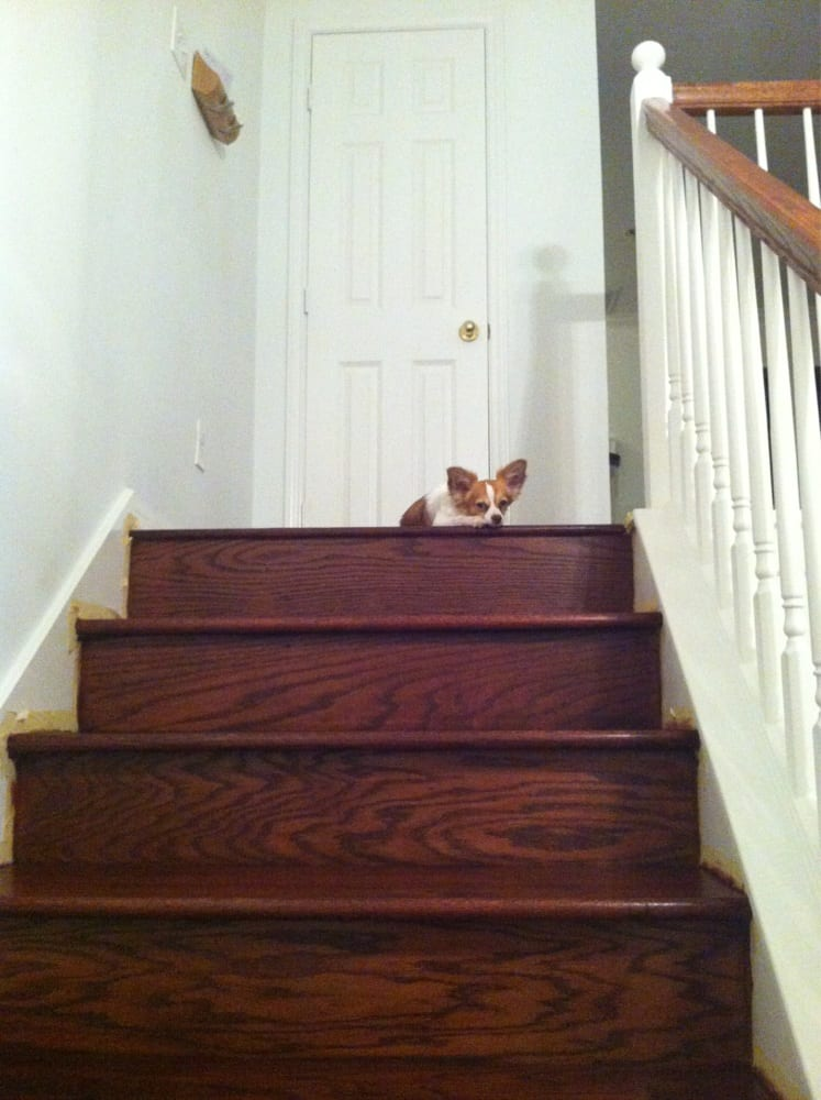 He loves our new wooden floor and stairs too yelp for Hardwood floors houston