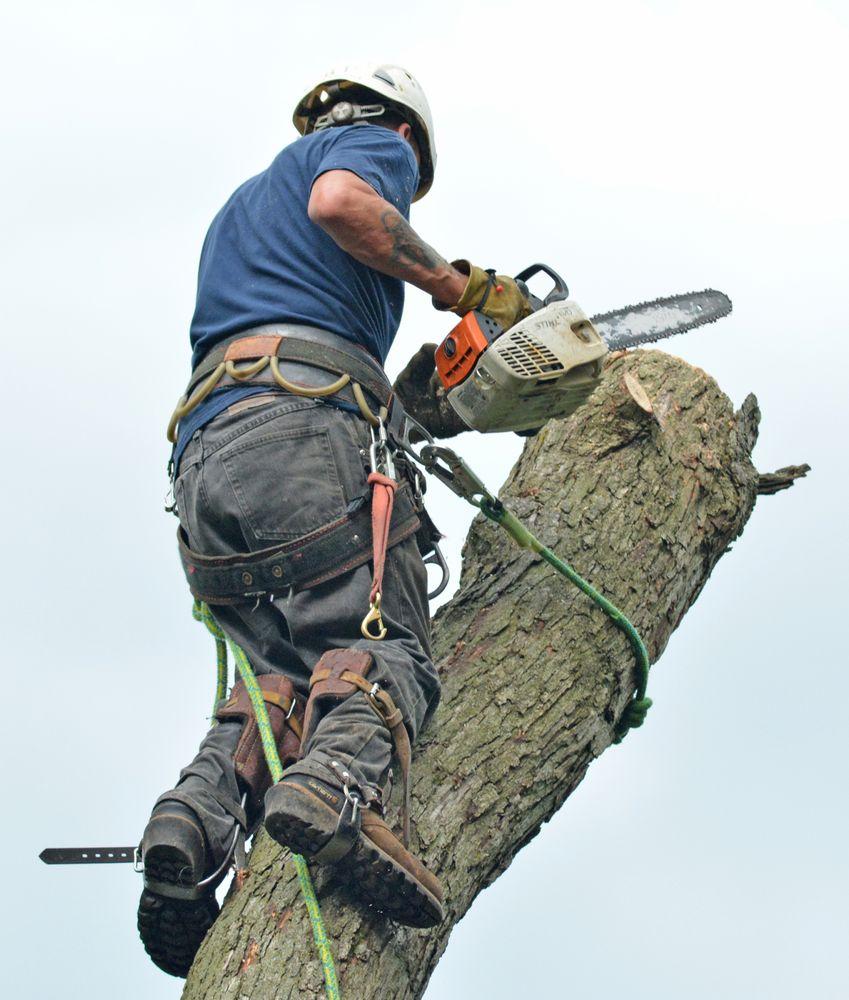 Pro Tree Care & Landscaping - Linda Johns: 6485 Garden Prairie Rd, Garden Prairie, IL