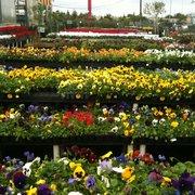 Source · Plants Photo Of Houston Garden Center   Katy, TX, United States.