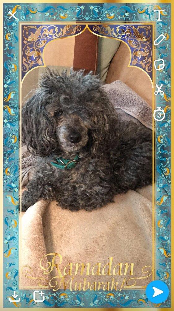 Jennifur's Pet Spa LLC: 470 Lafayette Ave, Hawthorne, NJ