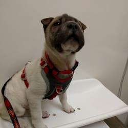 San Diego Puppy - CLOSED - 27 Photos & 96 Reviews - Pet