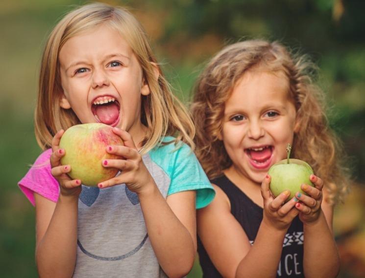 Linvilla Orchards 485 Photos 287 Reviews Markets 137 W