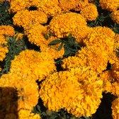 Armstrong Garden Centers 47 Photos 67 Reviews Nurseries Gardening 1364 Morena Blvd