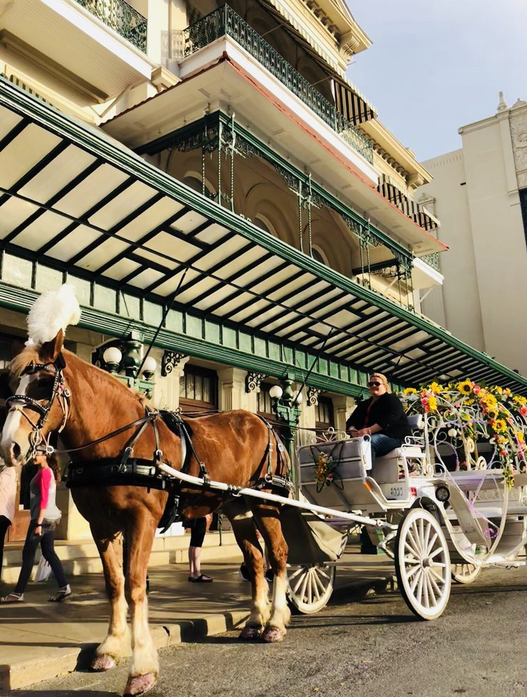 Bluebonnet Carriage: 9960 Macaway, Adkins, TX