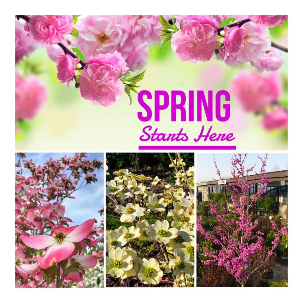 Sherwood's Forest-Nursery & Garden Center: 2651 Barrett Station Rd, Ballwin, MO