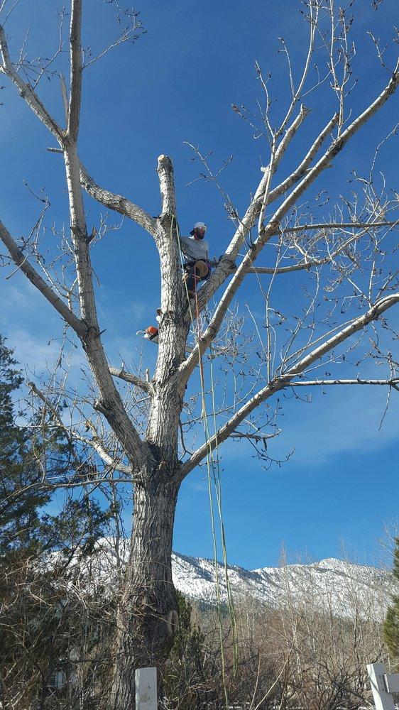 Perfect Ascent Tree Services