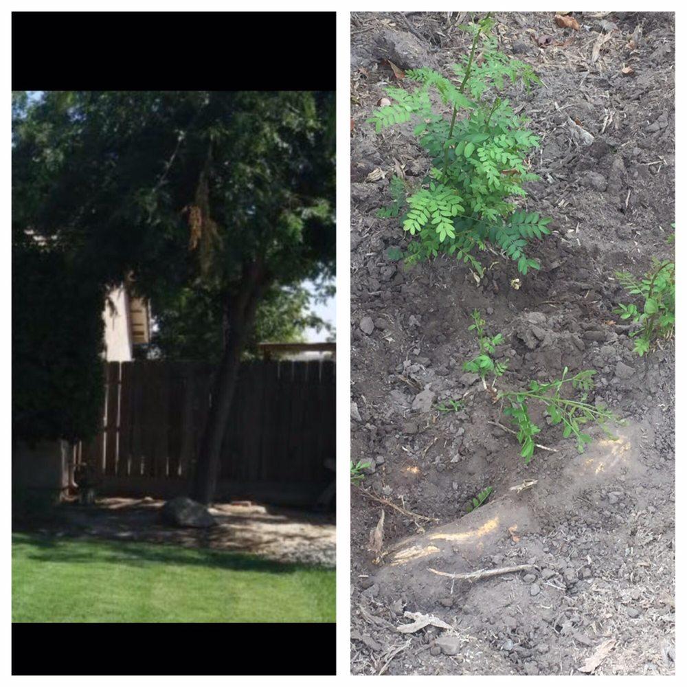 Payless Tree Service: Laton, CA