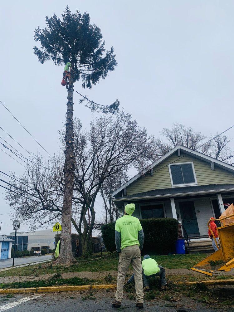 Tree Guy Now: Easton, PA
