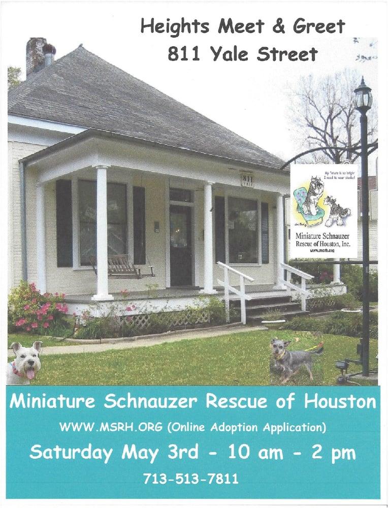 Miniature schnauzers for sale houston tx