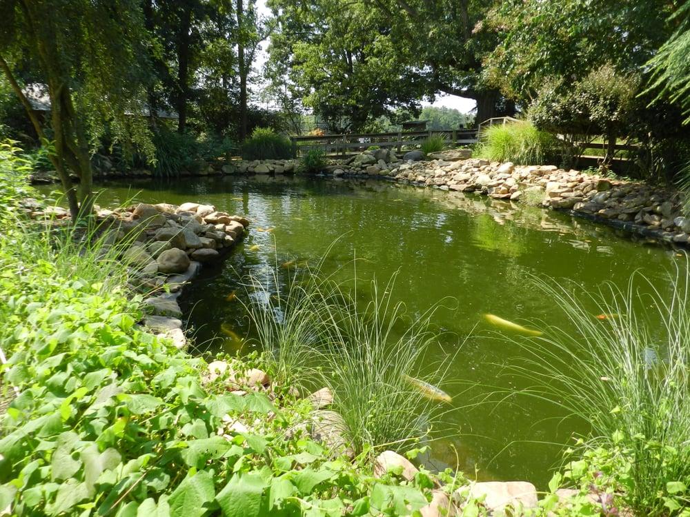 Koi pond water was full of algae though yelp for Koi ponds near me