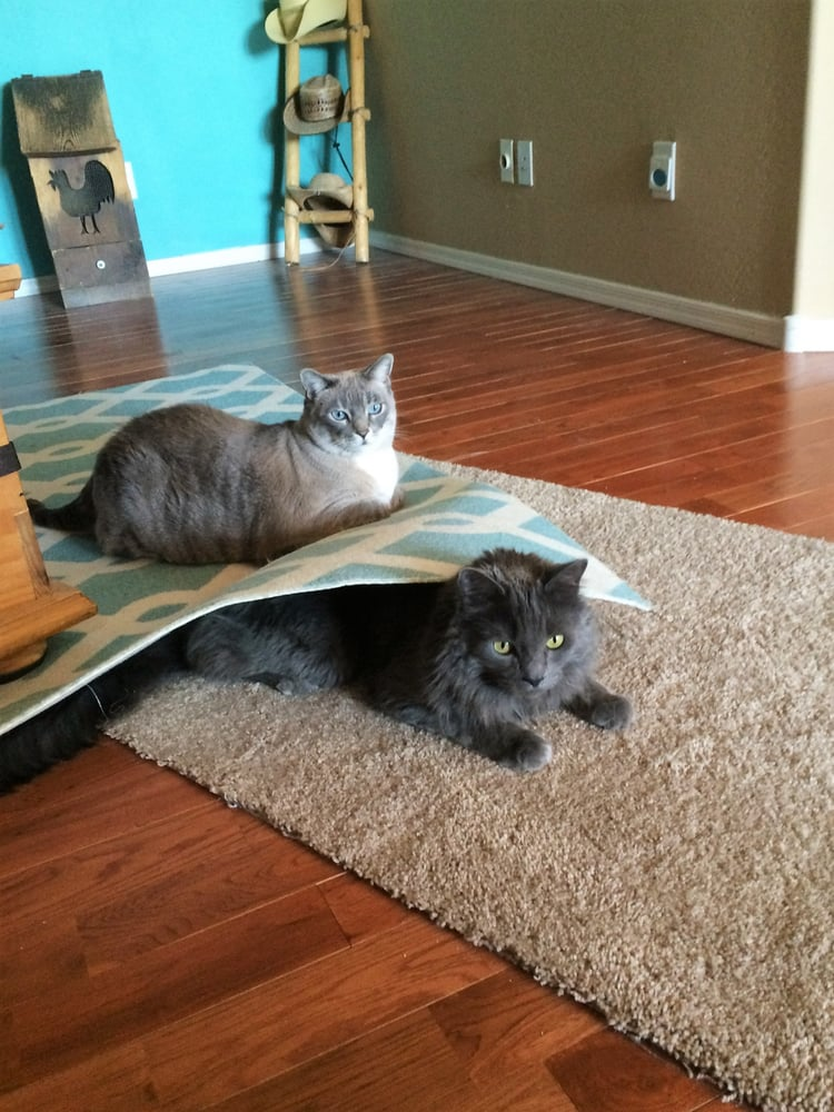 Denise's Home Sweet Home Pet Sitting - Pet Sitting - 29555 ...
