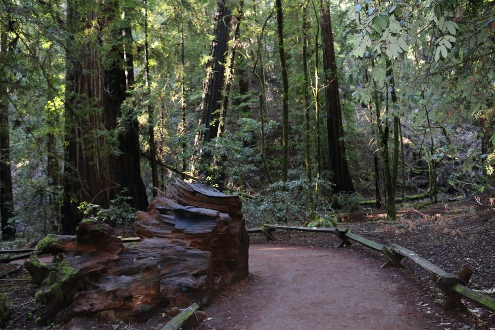 Armstrong Redwoods State Natural Reserve: 17000 Armstrong Woods Rd, Guerneville, CA