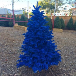 Chauvet Tree Farms - Temp. CLOSED - 32 Photos - Christmas Trees ...