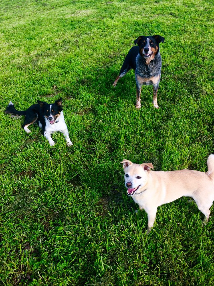 McCann's Canine Care: 12852 Cabrillo Hwy, Pescadero, CA