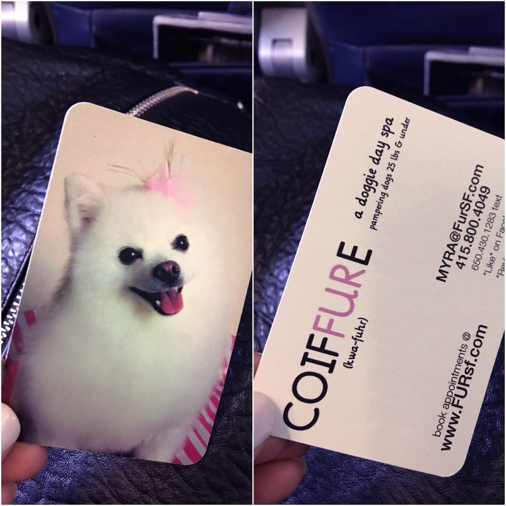 Yay our dog lenisee made it on to one of myras business cards photo of coiffure san francisco ca united states yay our dog reheart Choice Image