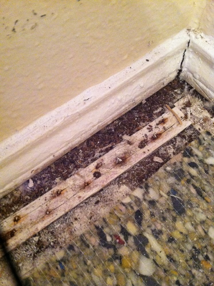 Dead ants, bugs, dirt under the carpet in the bedroom. This is ...