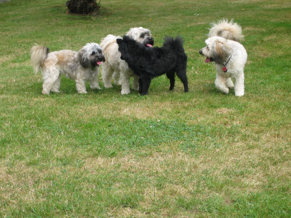 Surrey dog day care pet boarding pet sitting 9074 135a for Dog boarding places near me