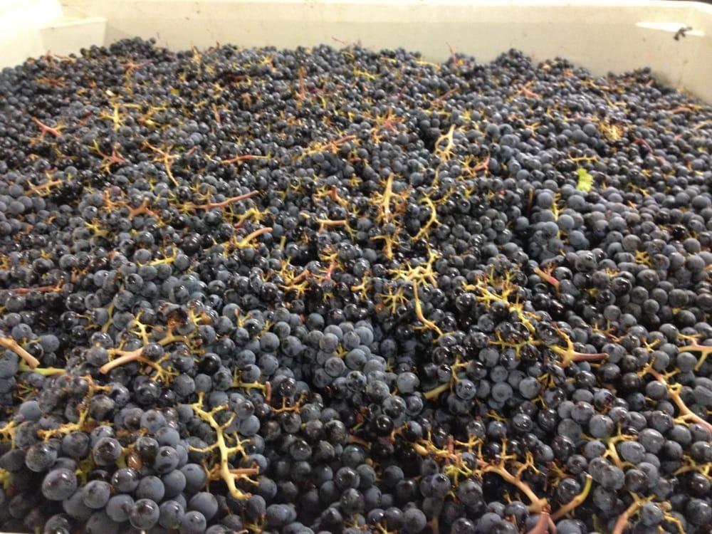 Fall Line Winery