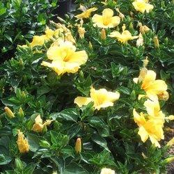 Walmart Garden Center Nurseries Gardening 7631 Gall Blvd