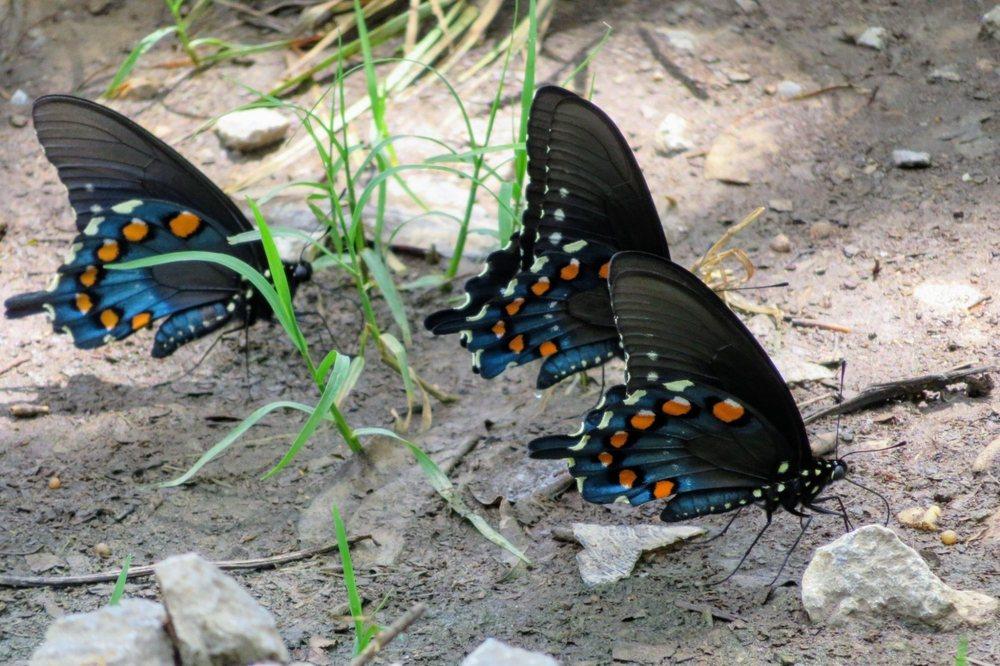 Goldsmith Schiffman Wildlife Sanctuary