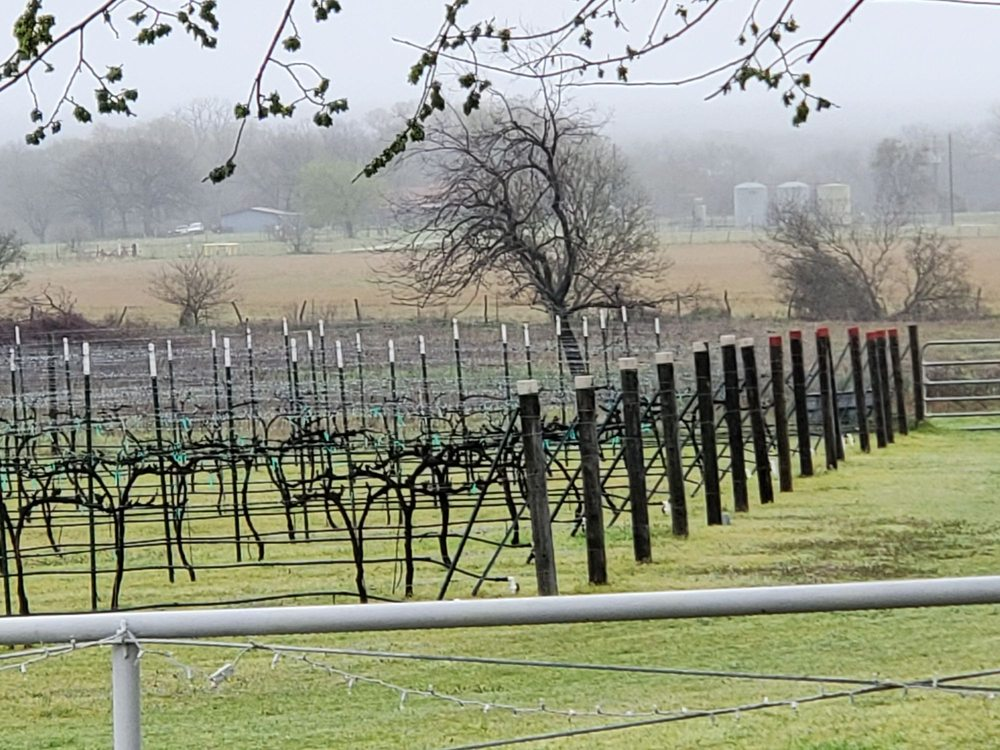 TF Vineyard & Winery: 162 Private Rd 4689, Boyd, TX