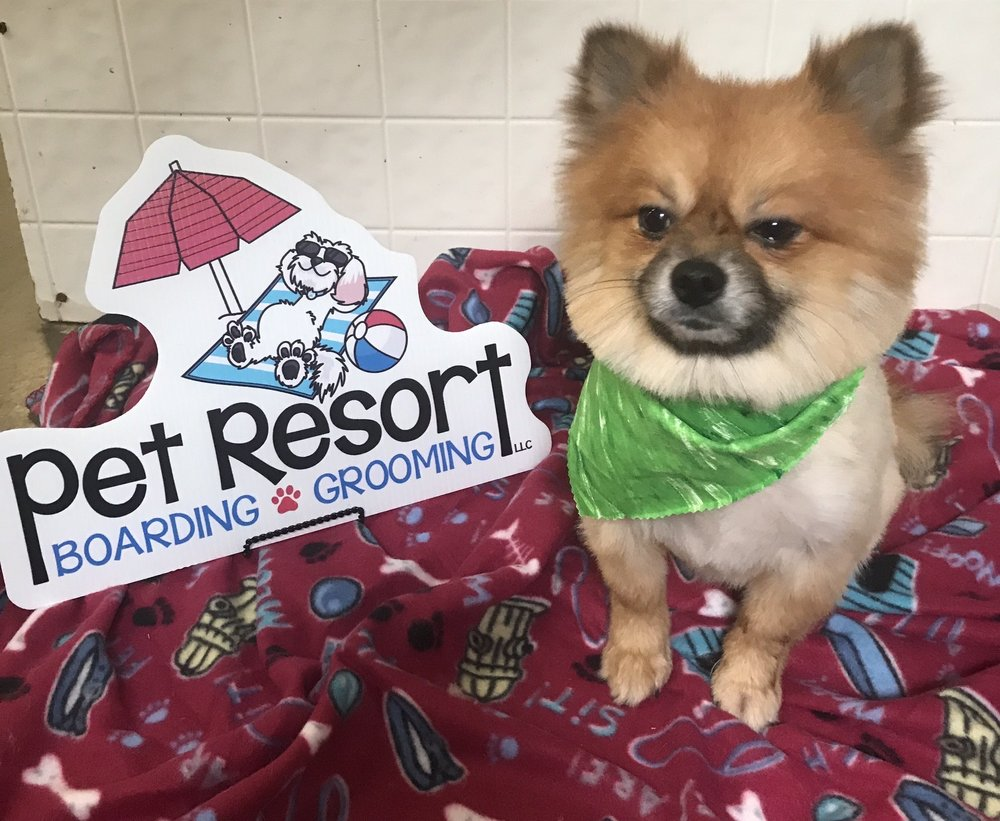 Pet Resort Boarding & Grooming: 61 County Rd, Corinth, MS