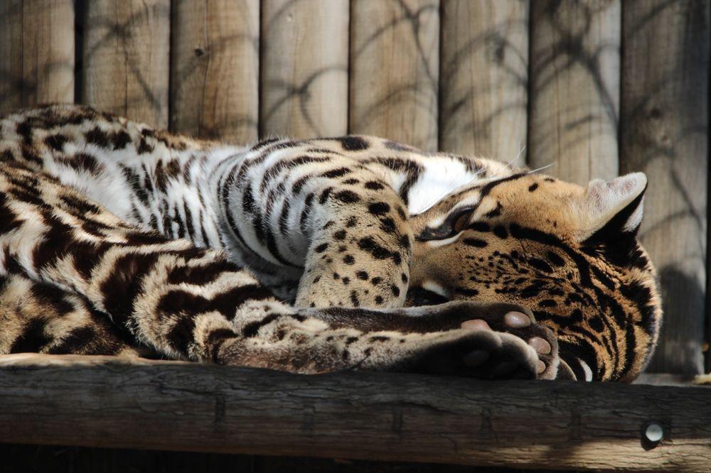 Social Spots from Orange County Zoo