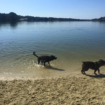 Photo Of Bayview Dog Beach Pensacola Fl United States Dogs Playing On