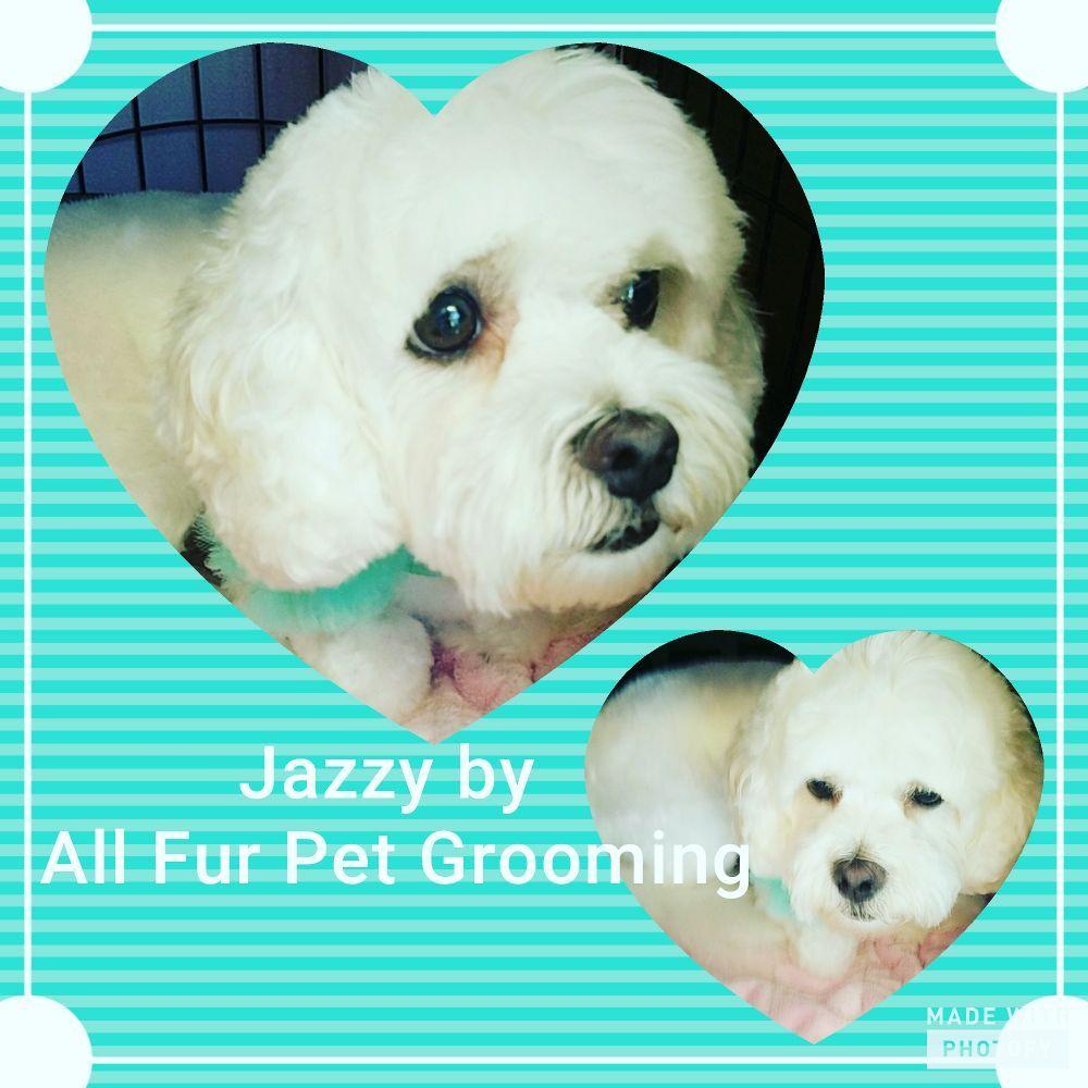 All Fur Pet Grooming: 36080 Goodwin Dr, Locust Grove, VA