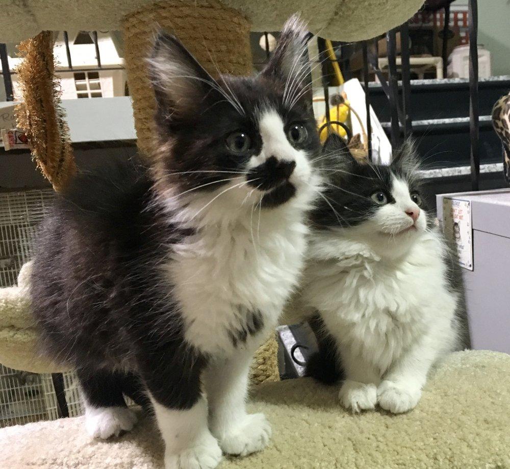 The Woonsocket Cat Sanctuary: 266 Mendon Rd, Woonsocket, RI