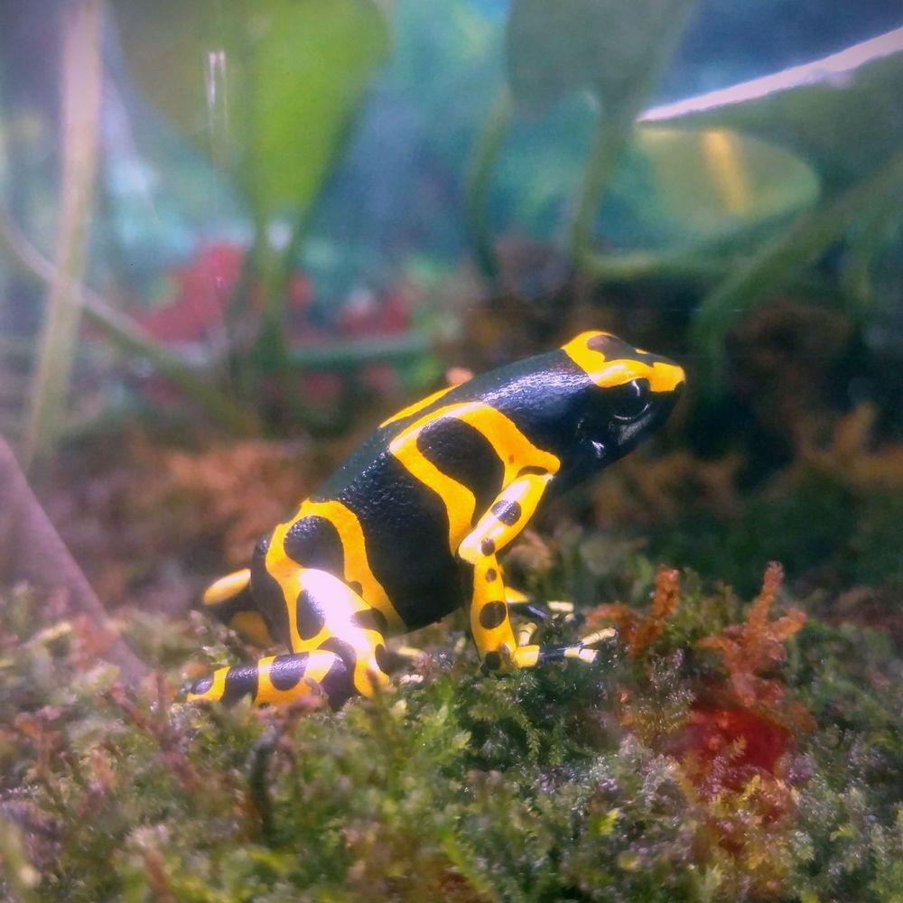 Pana'ewa Rainforest Zoo & Gardens: 800 Stainback Hwy, Hilo, HI