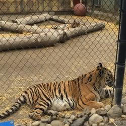 Big Cat Zoo Spokane