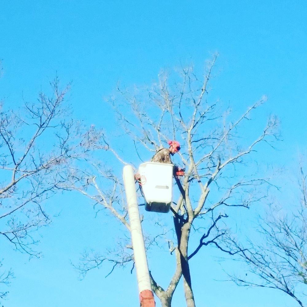 Osborn Tree Service: Warwick, RI