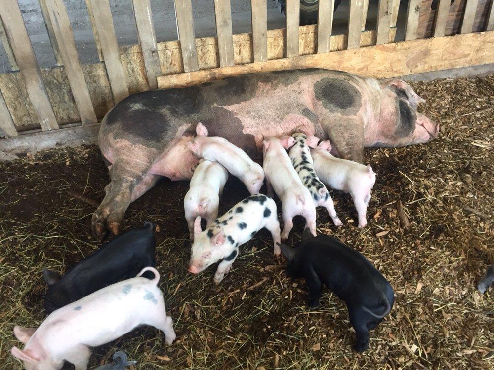 Chestnut Farms, CSA Meat: 404 Turkey St, Gilbertville, MA